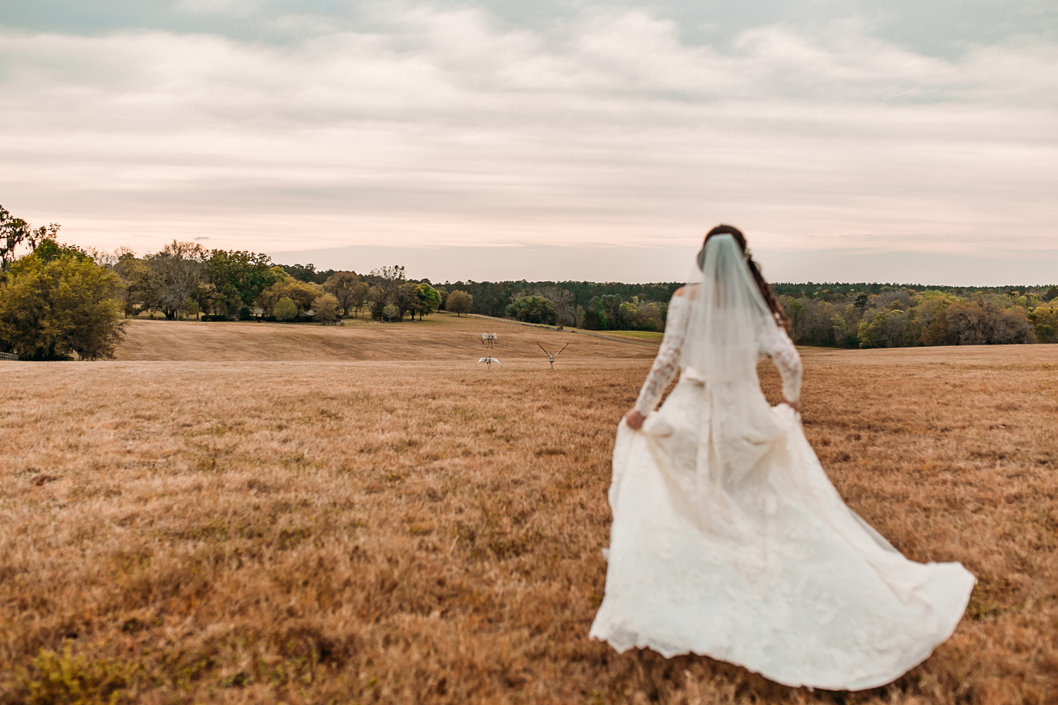 Gainesville, Florida Wedding Photography
